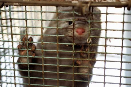 Tierquälerei in der Pelzproduktion